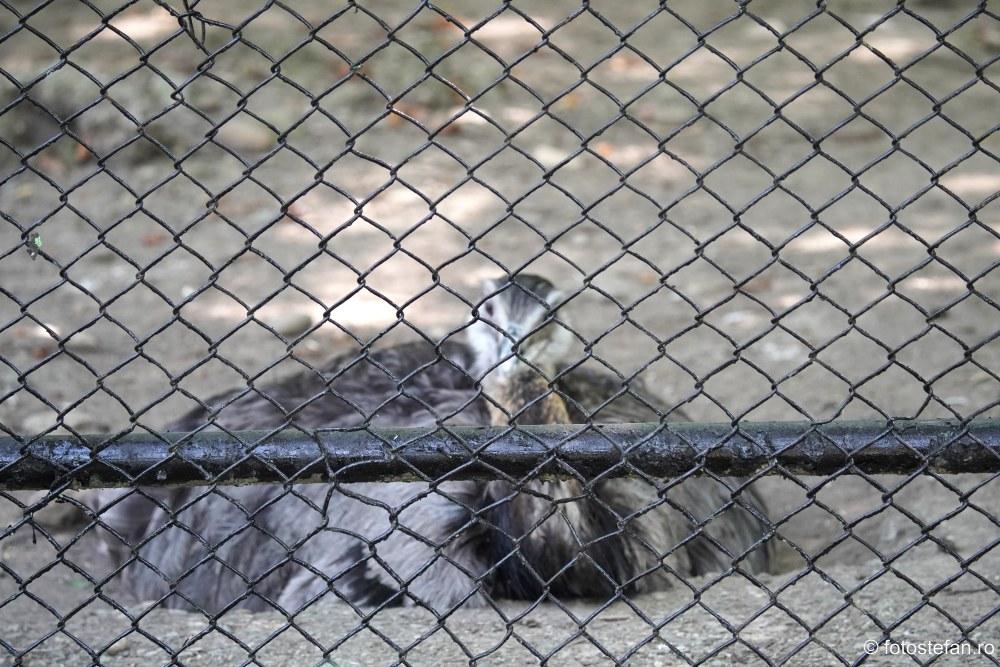 fotografie gard sarma zoo baneasa bucuresti