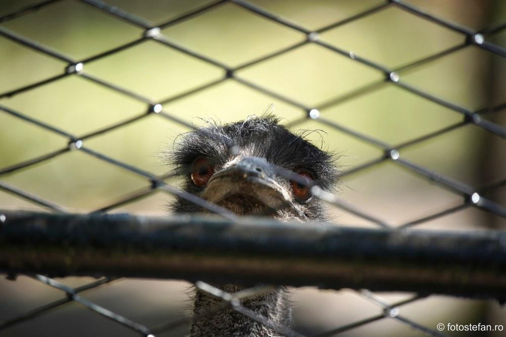 strut pasarea emu zoo baneasa bucuresti