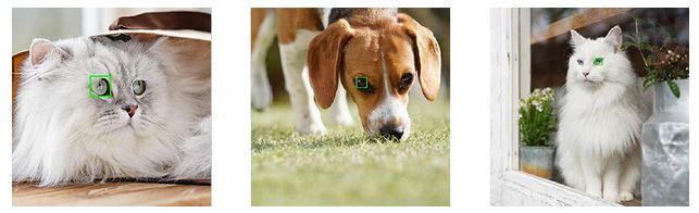 poza focalizare ochi animale functie sony