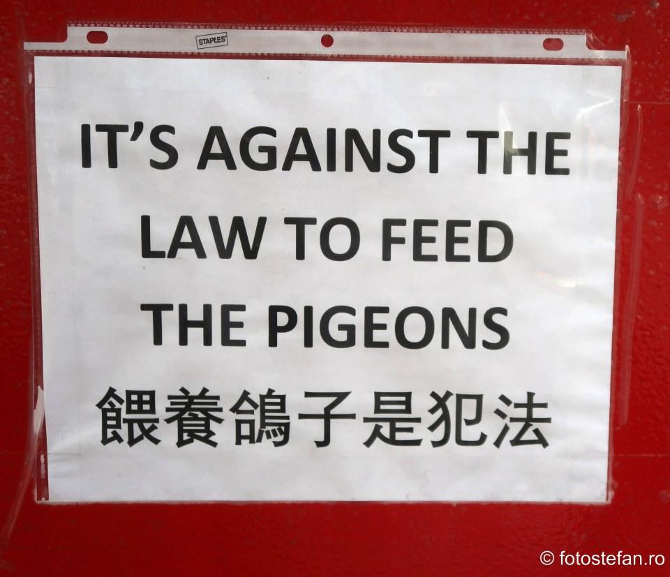 poza afis hranirea porumbeilor interzisa amenda