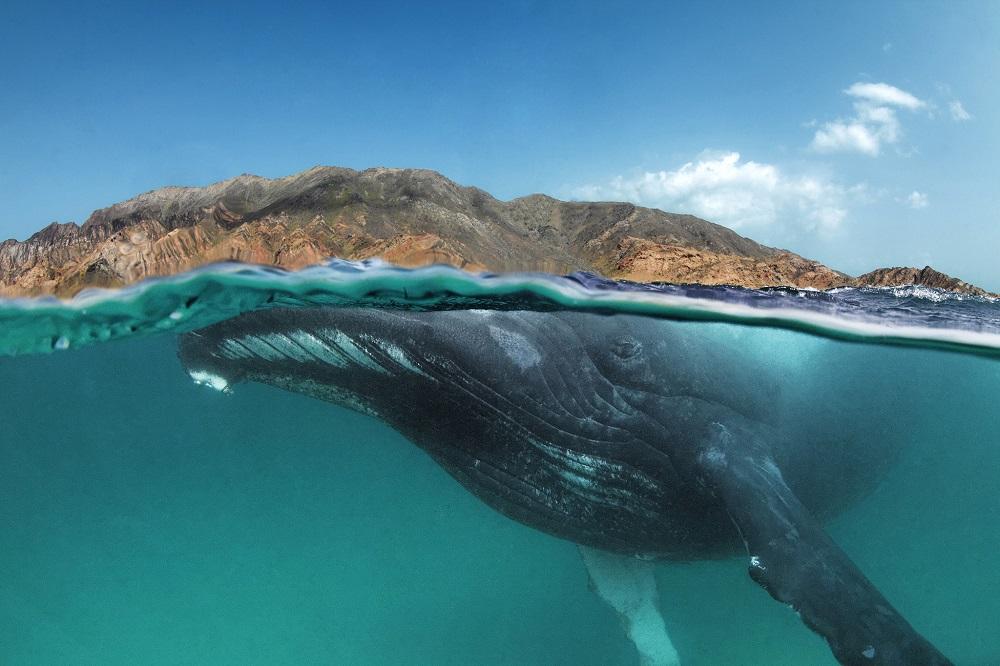 fotografie balena mare ocean tarm munte