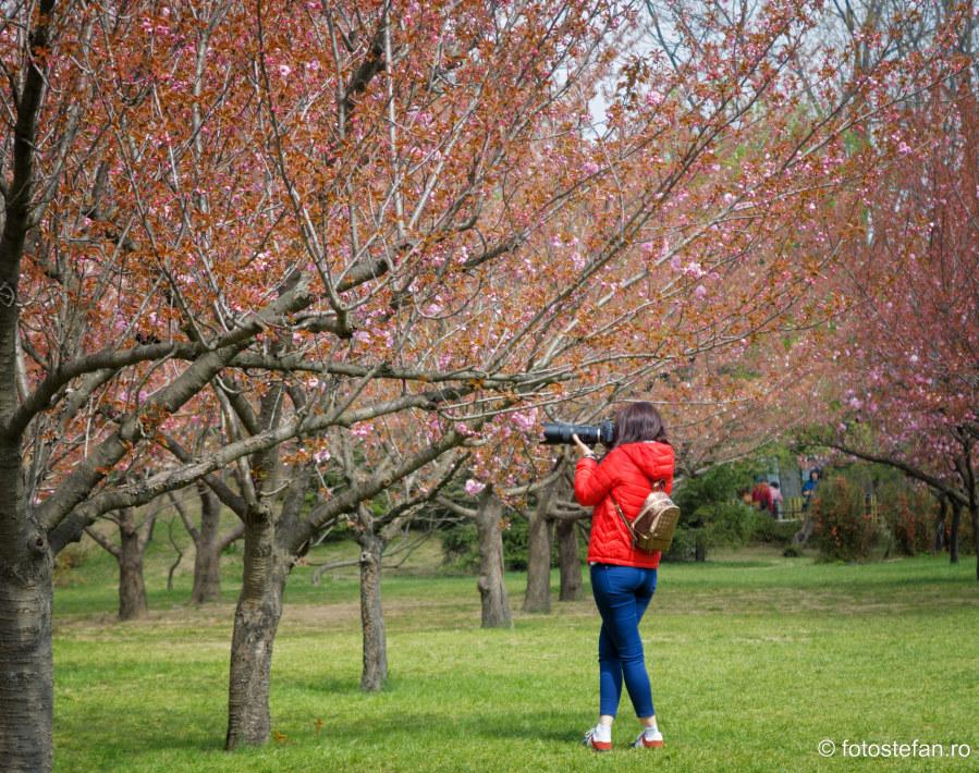 fotografierea florilor de cires idei sugestii fotografie de primavara