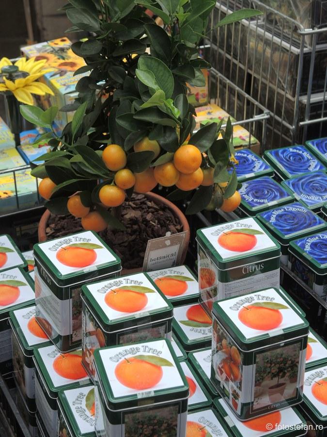 fotografie portocali decorativ piata de flori amsterdam