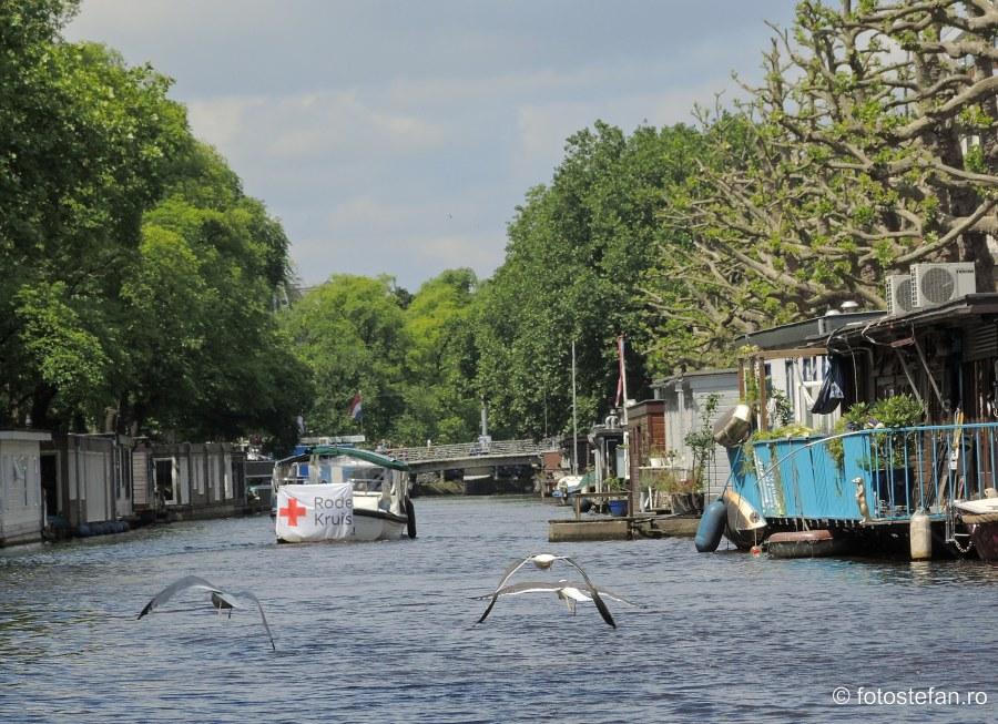 poza pescarusi canal amsterdam olanda