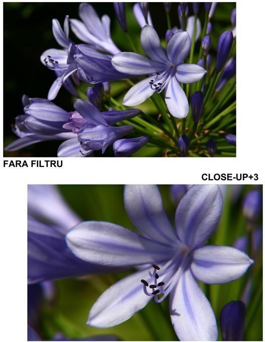 poza cu Filtrele close-up +3 b+w flori