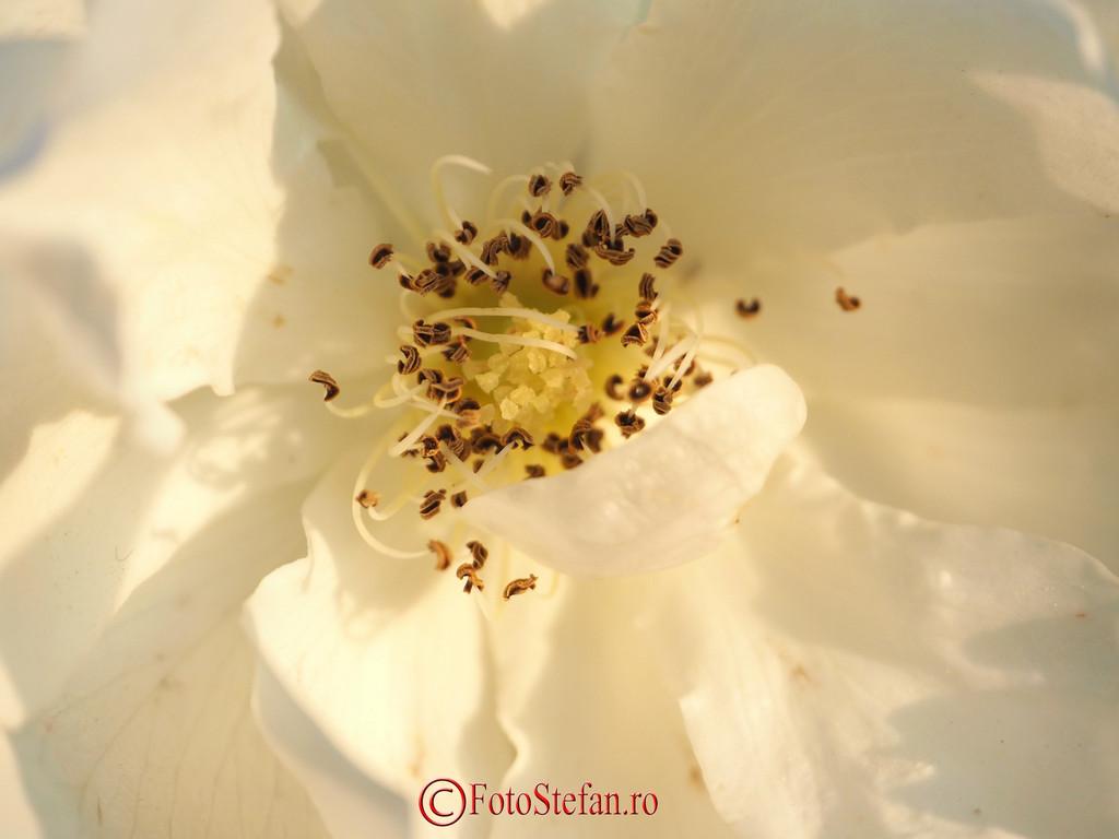 poza detaliu floare macro filtre close-up