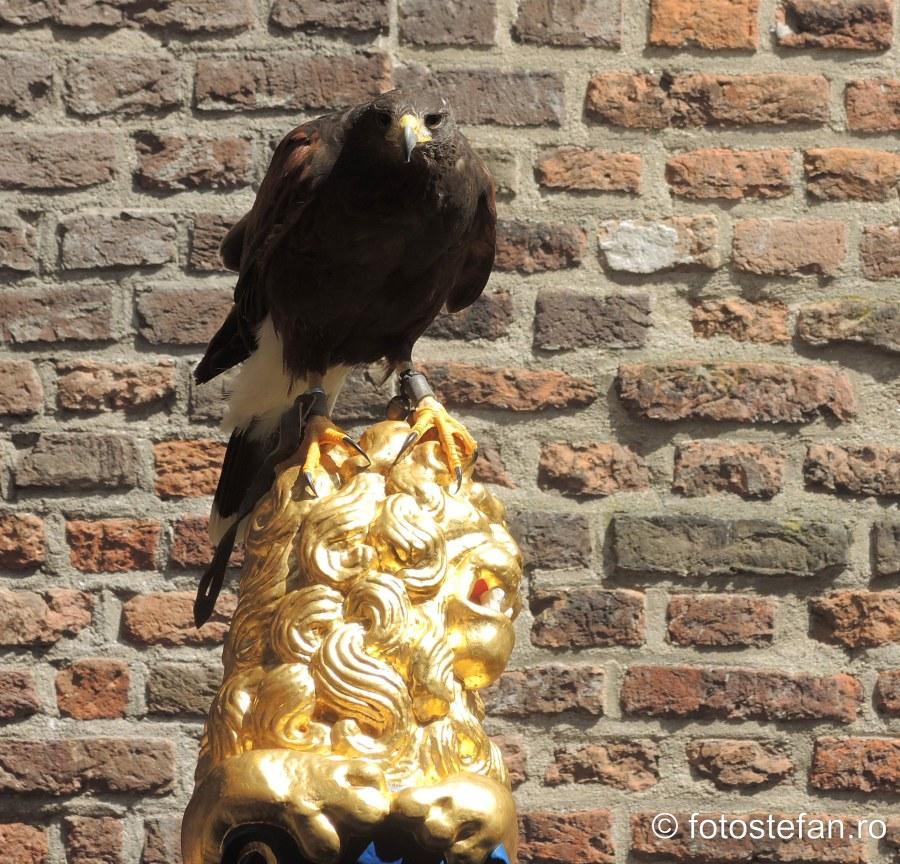 poza soim pasare de prada dresat castelul Muiderslot
