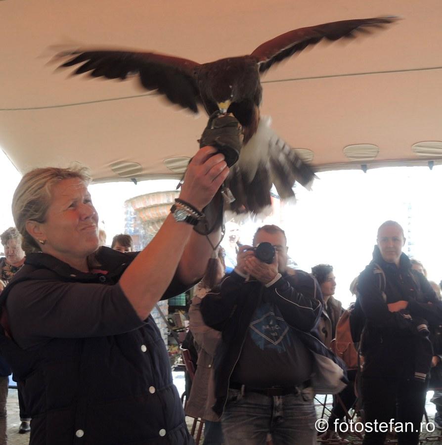 falconry Muiderslot castle Muiden Holland