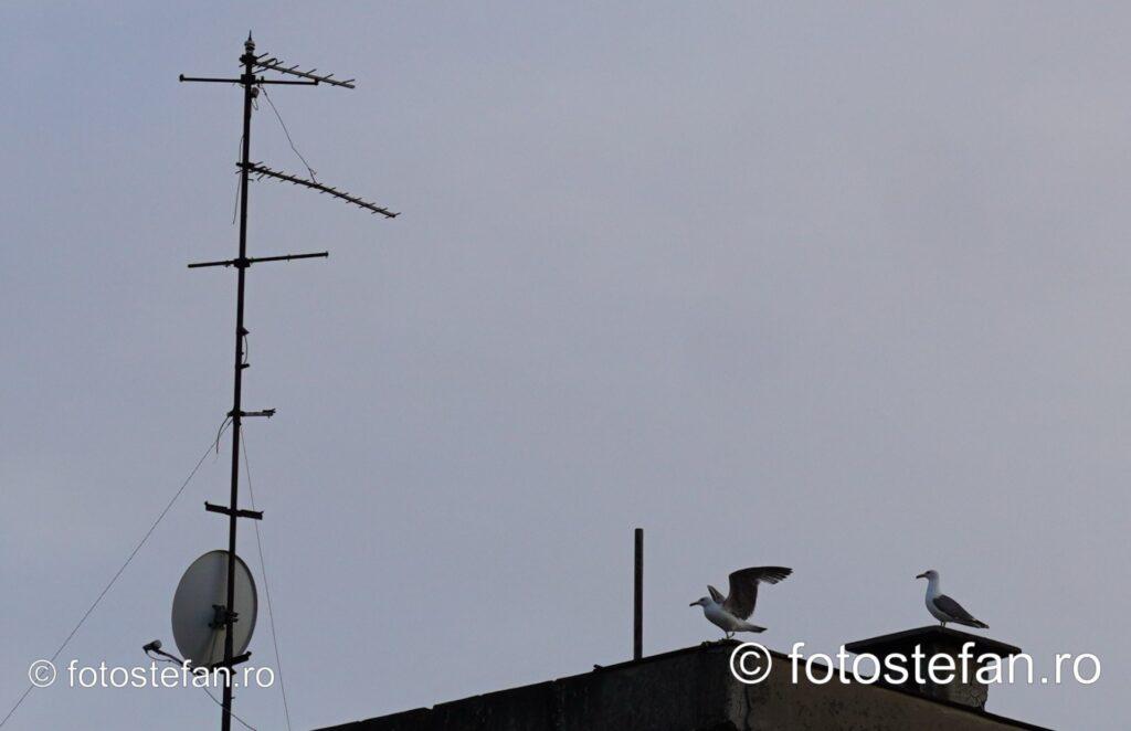 poza pescarusi antena bloc seara