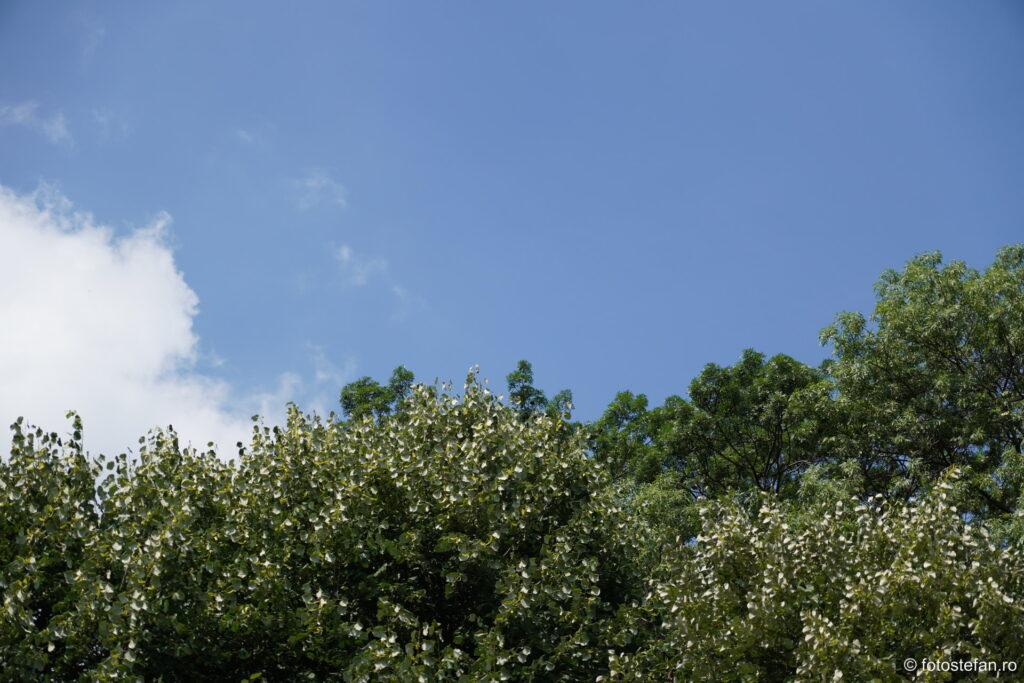 poza cer copaci nori bucuresti romania