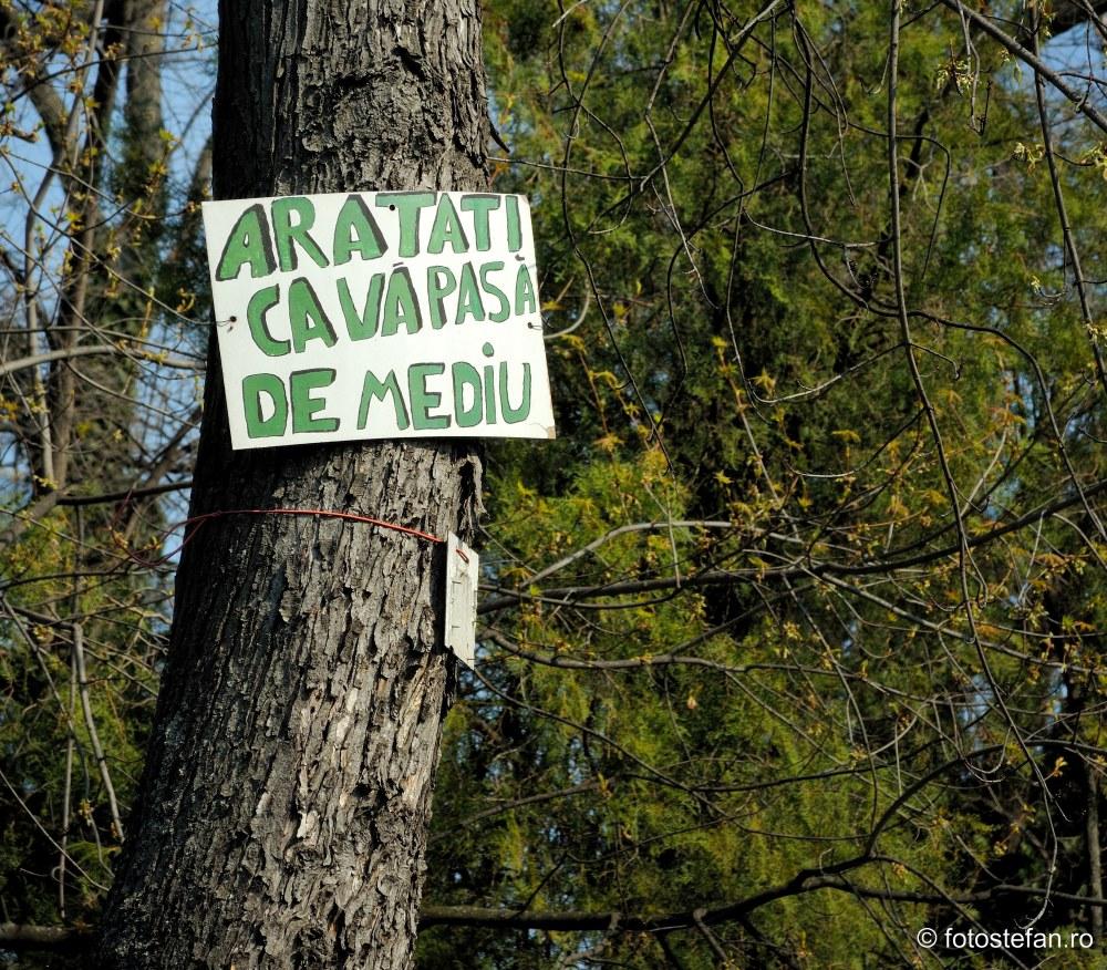 anunt protejare parc copac parc floreasca bucuresti fotografii