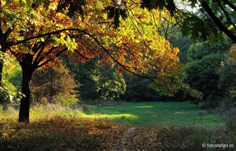 fotografii toamana culori frunze parc bucuresti