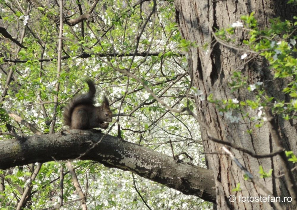 poza veverita parcul verdi bucuresti fotografii natura