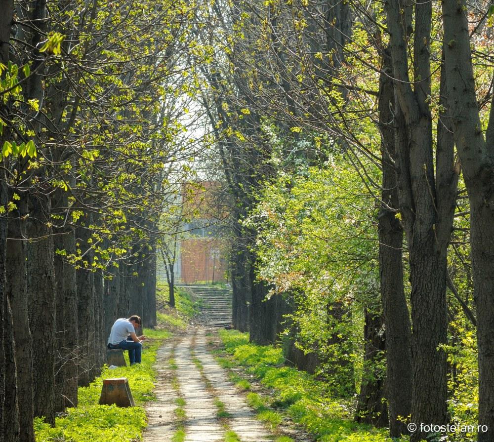 poza alee cubica parcul verdi bucuresti