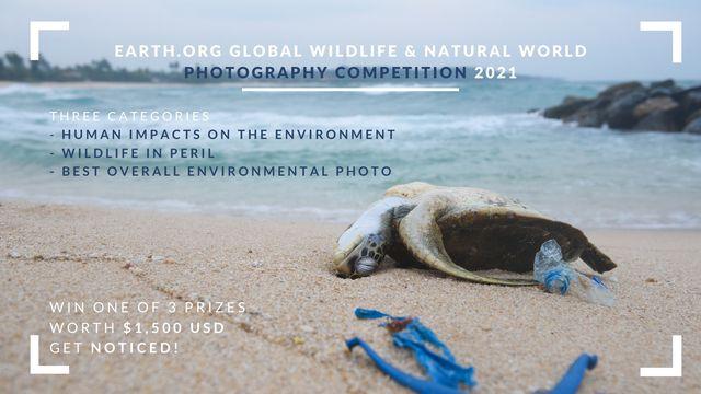 concurs fotografie natura viata salbatica