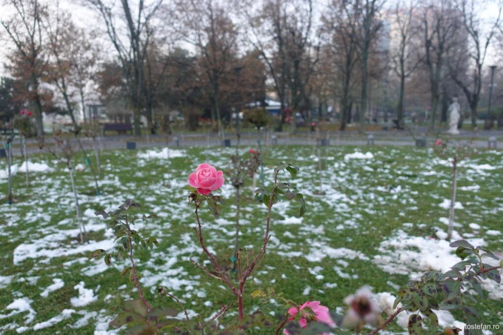 poza trandafir iarna zapada Sony ZV-1 review