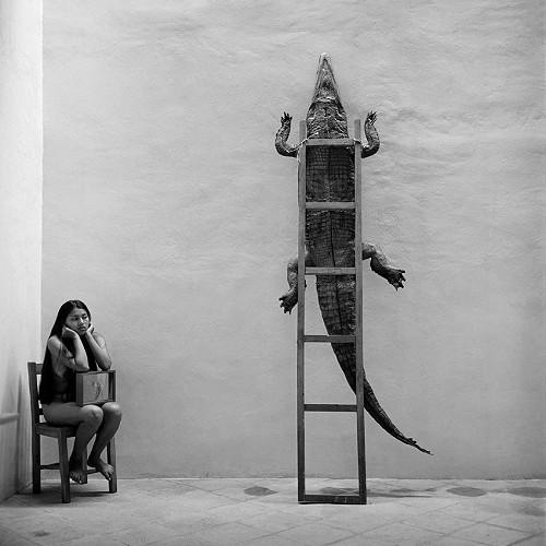 fotografie alb negru mexic crocodil perete
