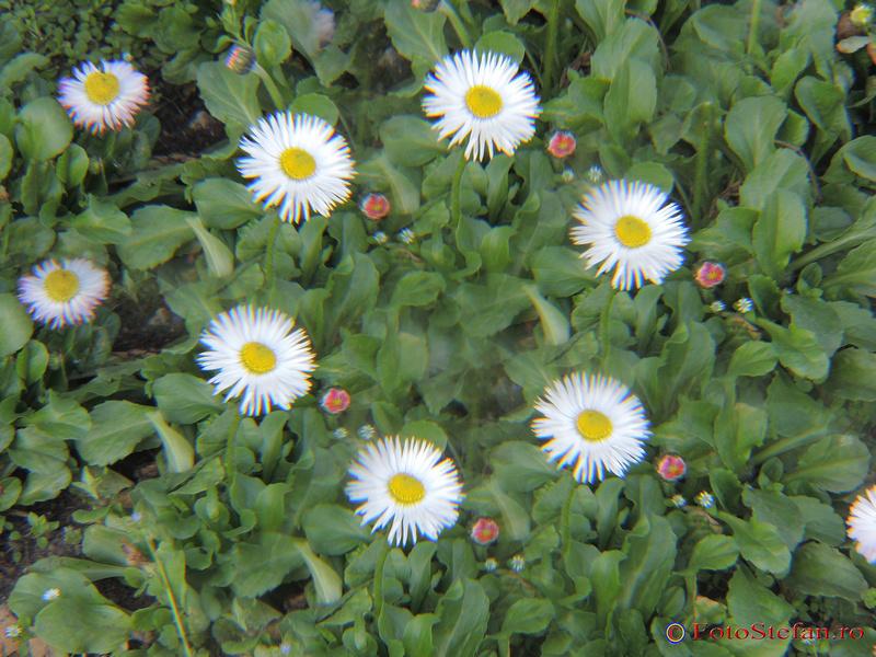 fotografierea florilor filtre efecte foto