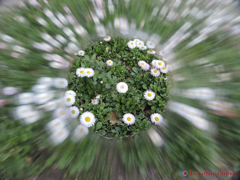 poze flori efecte speciale filtre