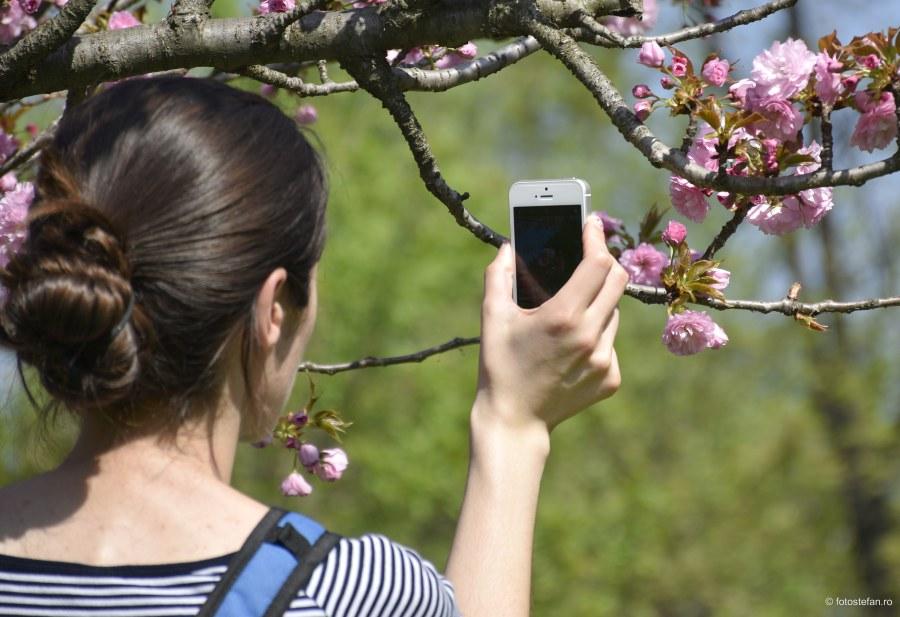 fotografierea florilor telefon mobil poza smartphone