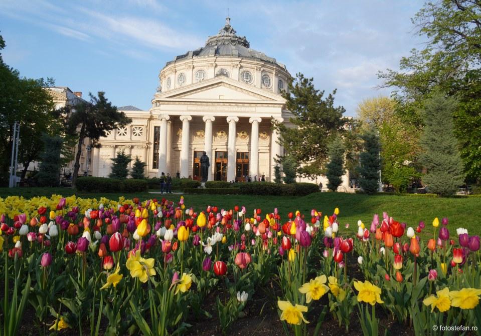 Destinatii turistice langa Bucuresti. Cinci locuri de vizitat in weekend aproape de Capitala Romaniei poza ateneu flori
