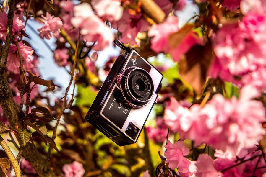 poza vechi aparat foto copac flori reduceri de primavara 2021