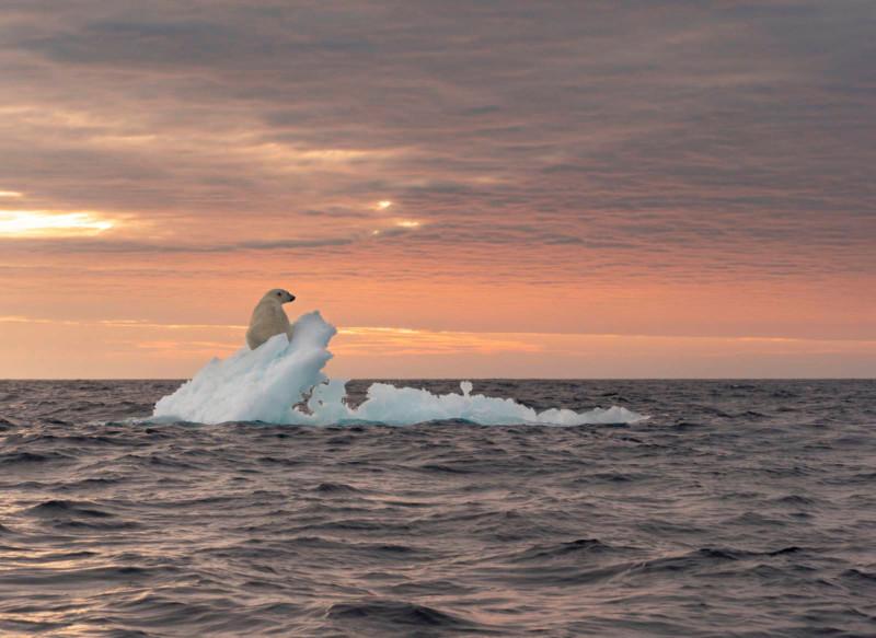 poza urs polar ghetar apus mare