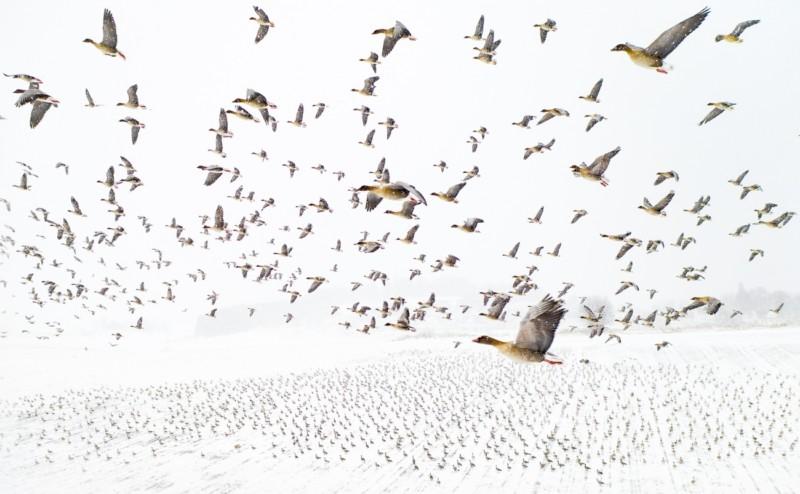 fotografie aeriana stol gaste migratoare drona