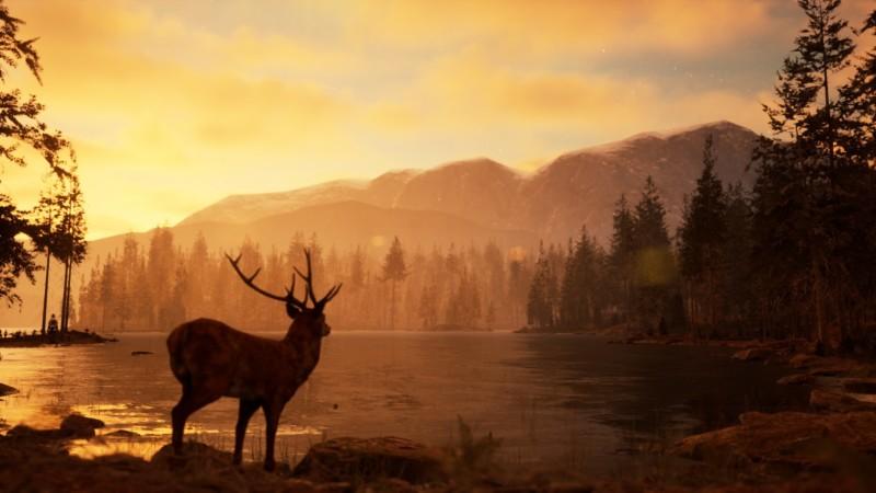 Photography Simulator joc video  PC fotografie wildlife